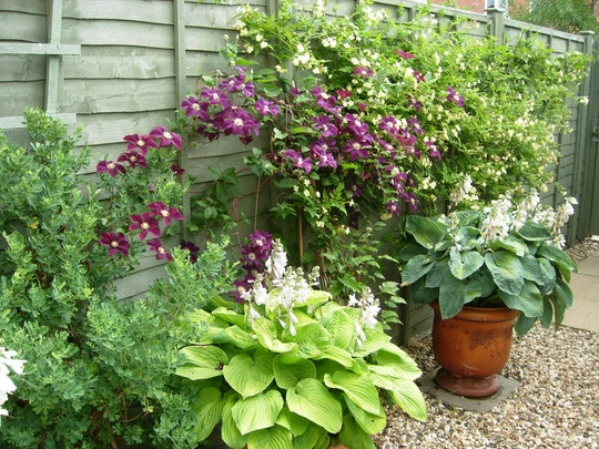 1000 images about hiding ugly fencing on pinterest - Garden ideas to hide fence ...