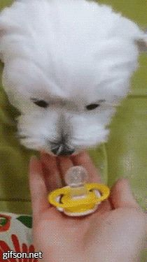 gif LOL dog animals cute puppy animated gif pacifier