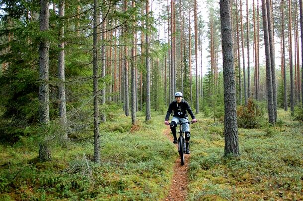 Finlands forest