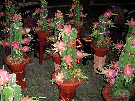 Dragon Fruit Cactus Exotic Fruits Pinterest Dragon
