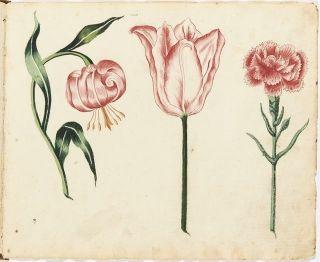 A flower study Adolf frederik Clásen 1757