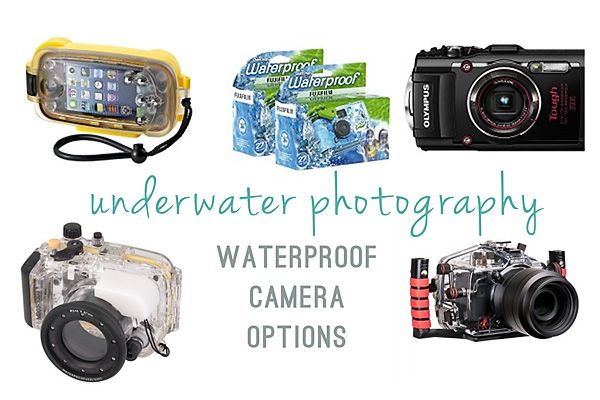 If you are interested in taking some underwater pictures this summer, you'll need a waterproof camera. Here's some options from the least expensive to the most, depending on what features you are looking for, and your budget.