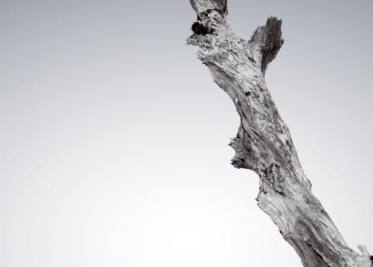 Robert Wyatt and The Future Eve - KiTsuNe EP - Robert Wyatt