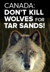 nike athletic shoes Please sign petition to stop wolf slaughter in Canada