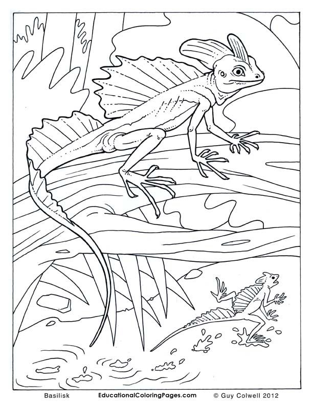 lizard coloring pages, lizard colouring pages Animal