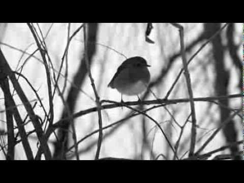 ▶ Fausto Bottai, Dalla mia stanza (haiku) - YouTubeMusica di Carlo Domeniconi