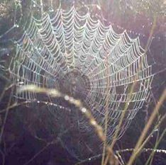 real spider web