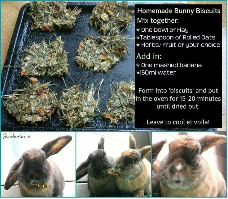 Homemade bunny biscuits