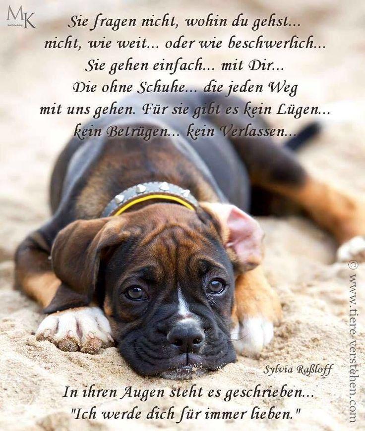 Pin Von Berthy Mander Auf Hunde Susse Hunde Bilder Der Boxer