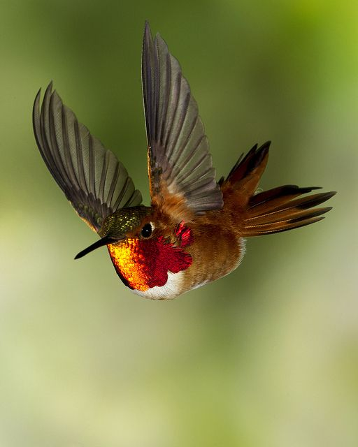 Amazing #hummingbird