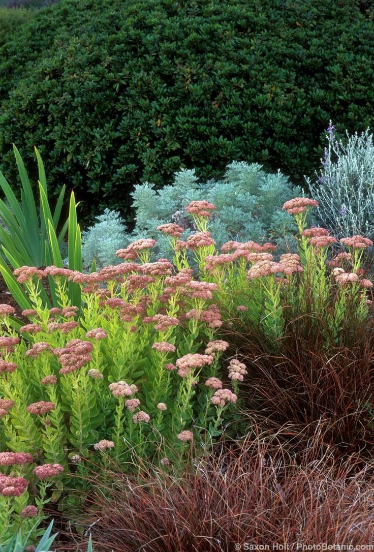 28 best images about f yard option 1 on pinterest for Planting plans with grasses