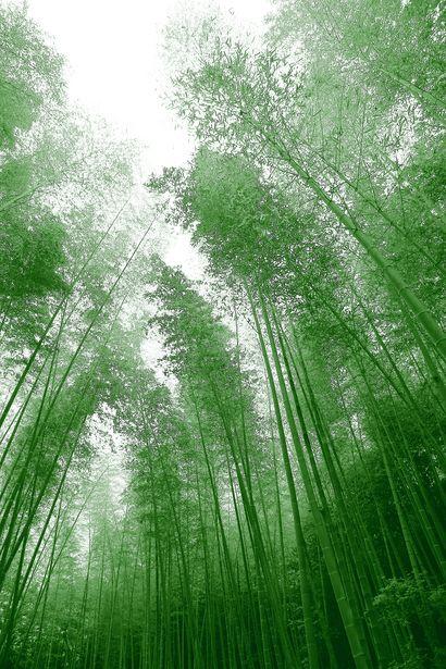 Feel the green | 植物 > 樹木の写真 | GANREF