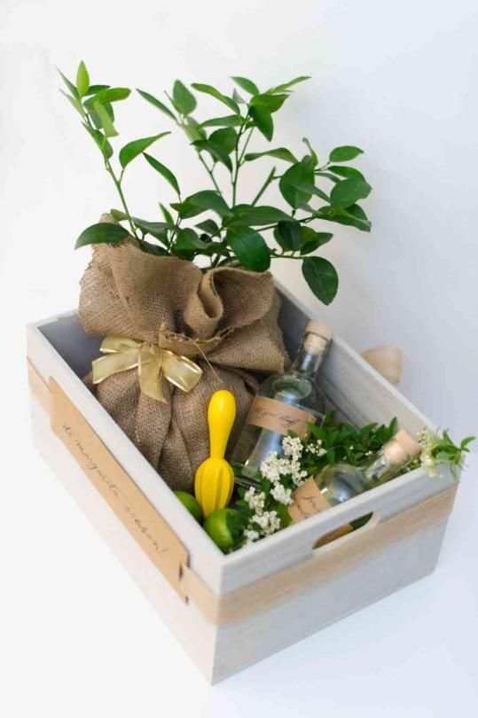 Customized gift box for DIY cocktail that you can make and give as a gift. Substitute the lemon tree in this cocktail grouping for a mint plant for a mojito twist!