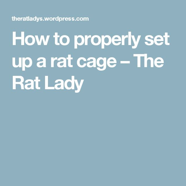 How to properly set up a rat cage – The Rat Lady