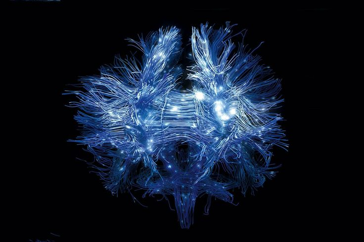 How mapping neurons could reveal how experiences affect mental wiring (Wired UK)