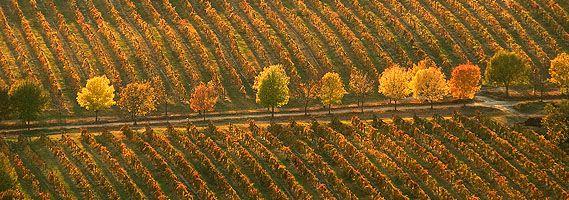 Weinregion Villány - Ungarn