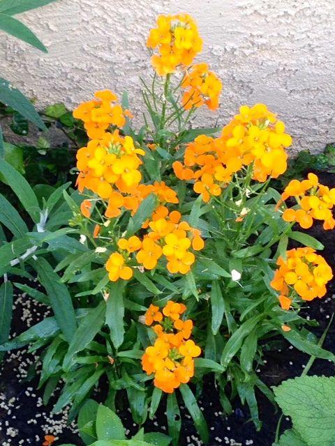 Flower Garden Ideas Colorado 48 best garden: wild flower images on pinterest   wild flowers