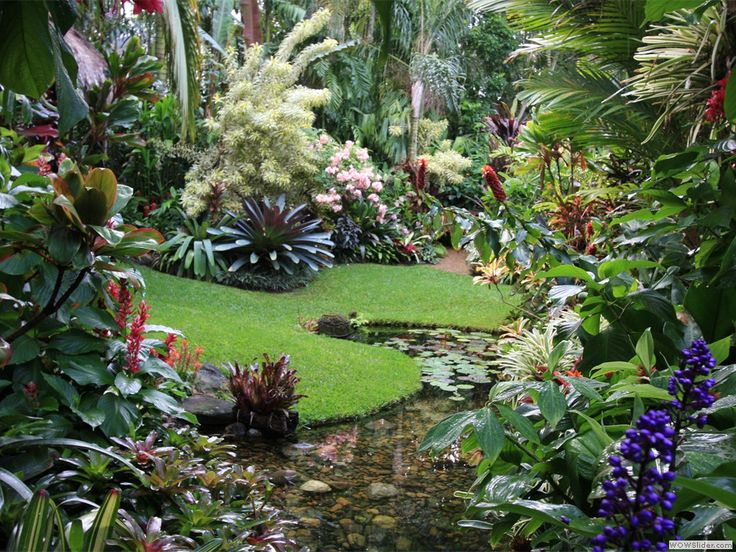 Garden Design Brisbane best 20+ tropical gardens ideas on pinterest | tropical garden