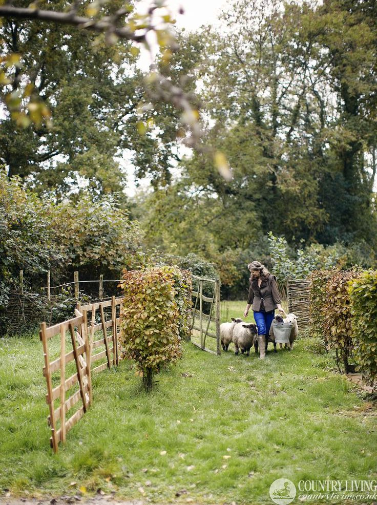 Find out what's unfolding down on Walnuts Farm in October http://www.countryliving.co.uk/lifestyle/walnuts-farm/october-walnuts-farm