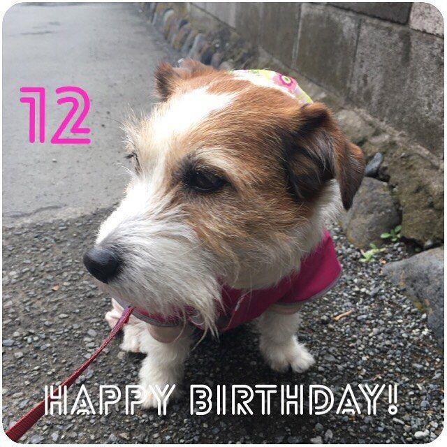 . 寒いエイプリルフールの今日 ぴったんは12歳になりました。 あっという間の12年。 ずっとずっとお母さんのそばにいてねっ 愛してるよぴったん(。☌︎ᴗ☌︎。)❤︎ . . #petstagram#JRT#jackrussell  #ぴったん#ピッピ #dog#doggy  #doglife #dpgs#pet#犬#愛犬 #家族#犬スタグラム #誕生日#おめでとう#12歳  #桜と撮りたかった