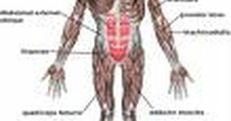 Condições que causam perda de massa muscular. A paralisia é a perda temporária ou permanente do controle do músculo, nervo e esqueleto em determinadas áreas do corpo, podendo ocorrer após uma lesão espinhal, um acidente vascular cerebral ou outras doenças debilitantes. Indivíduos que se tornam paraplégicos (paralisados da cintura para baixo) e tetraplégicos (paralisados do pescoço para baixo) ...