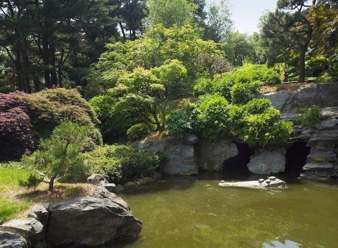 gratis dingen om te doen in New York Brooklyn Botanic Garden. In de winter zijn deze botanische tuinen met meer dan 10.000 plantensoorten gratis toegankelijk. Het hele jaar door geldt dat voor de dinsdag en zaterdag tussen 10 en 12 uur.