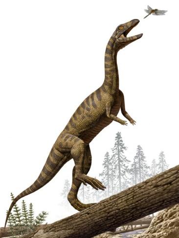 Effigia okeeffeae - foi um réptil pré-histórico que habitou a Terra durante o final do período Triássico da era mesozóica. Seus restos fossilizados foram descobertos no Novo México, em 2006.  Apesar da semelhança, não era um dinossauro e sim um réptil da ordem dos rauisuchia, parente mais próximo dos crocodilos atuais. A incrível semelhança com os dinossauros bípedes se trata do que é provavelmente o mais extremo caso de evolução convergente, ou evolução paralela já visto. Fonte: Wikipédia.