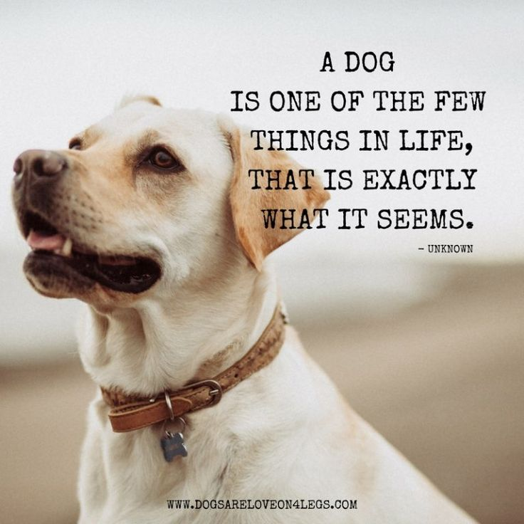 10 Greatest Dog Quotes That Prove A Dog Is The Best Gift
