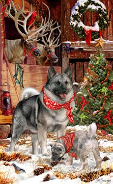 Norwegian Elkhound - Guarding Santa's Reindeer