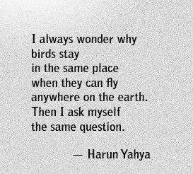 Fuelisms : I always wonder why birds stay in the same place when they can fly anywhere on earth. Then I ask myself the same question.
