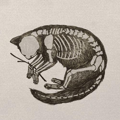 Scientific Illustration: Catnatomy