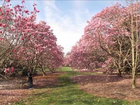 National Arboretum in April