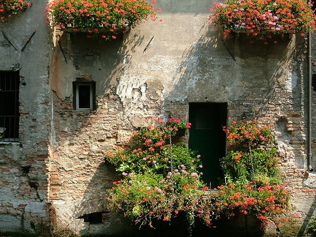 Treviso #italy