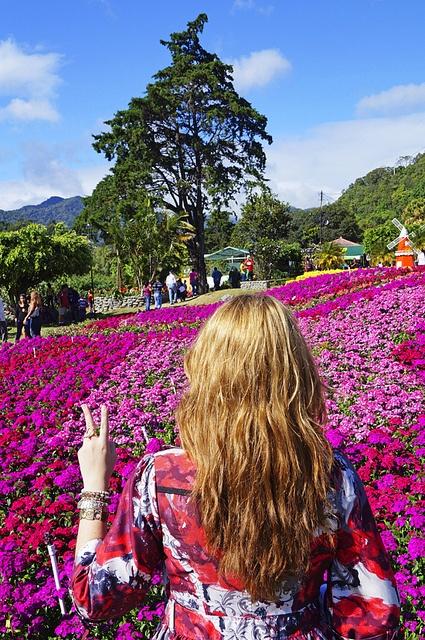 Feria de las flores, Boquete, Panama -- Just look at all those flowers !