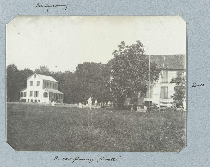 "Cacao-plantage ""Kwatta"", Théodore van Lelyveld, 1895 - 1898"