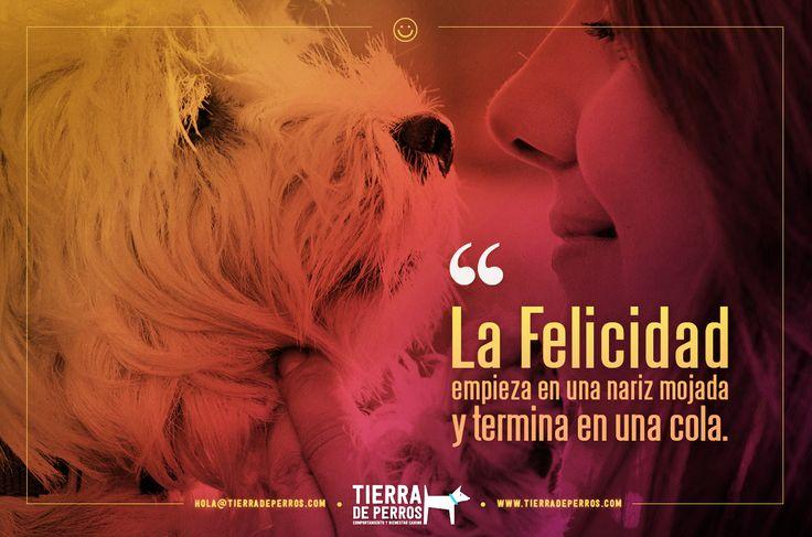 Quotes, frases, #TierraDePerros Guardería canina, hotel, entrenamiento para perros, veterinaria, intervención en problemas de comportamiento, perros, dogs, animals, pets, cute, love, Bogotá, Colombia, Perros Bogotá