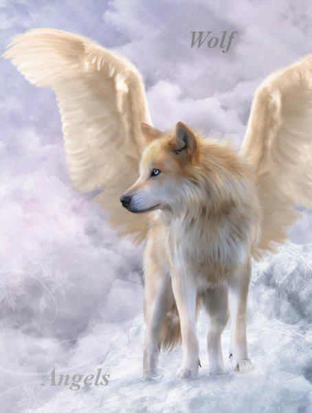 Wolf Angel.    Repinned by An Angel's Touch, LLC, d/b/a WCF Commercial Green Cleaning Co., Denver's Property Cleaning Specialists! http://www.anangelstouch.org