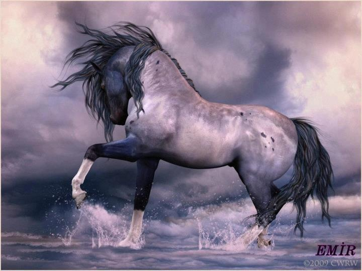Beautiful Hors, Andalusian Stallion, Andalusian Hors, Hors Art, Awesome Photos, Equine Art, Hors Photos, Beautiful Roan, Animal