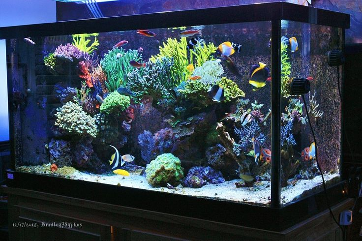 173 Best Images About Under The Sea In My Apartment On