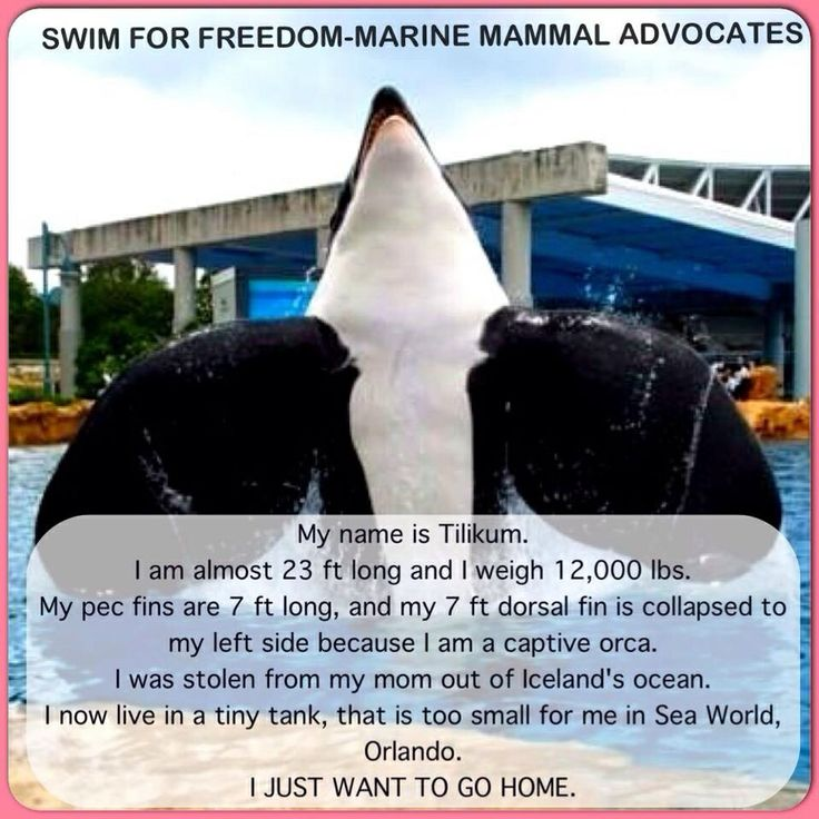 we should free captured whales Should seaworld free the killer whales is a crime not only to the captured whale but the rest of we should free all the whales they are not.