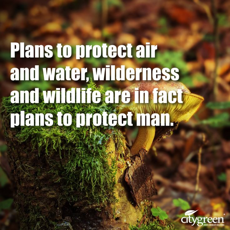 Famous Wildlife Conservation Quotes: 56 Best Environmental Quotes Images On Pinterest