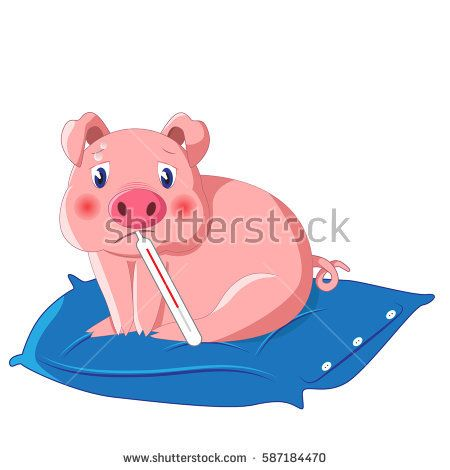 vector illustration of little cute pig with thermometer having swine flu also known as h1n1 on blue pillow