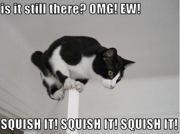 Spider!Kitty Cat, Laugh, Spiders, Funny Pictures, Funny Cat, Funny Stuff, Squish, Humor, Funny Animal