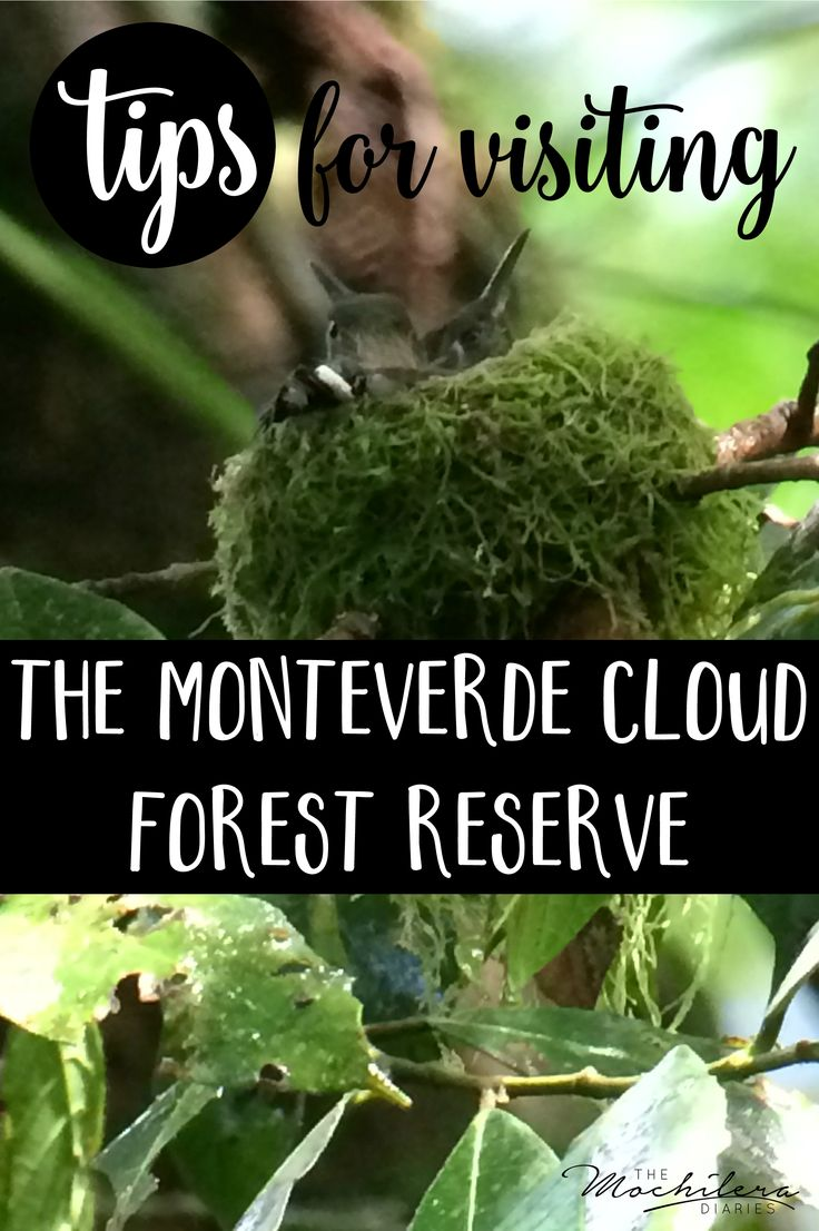 Touring the Monteverde Cloud Forest Reserve in Costa Rica was one of my absolute favorite experiences.  With the help of our amazing guide, we saw so much incredible wildlife!  Click for the full experience and a few handy tips for your trip. | The Mochilera Diaries