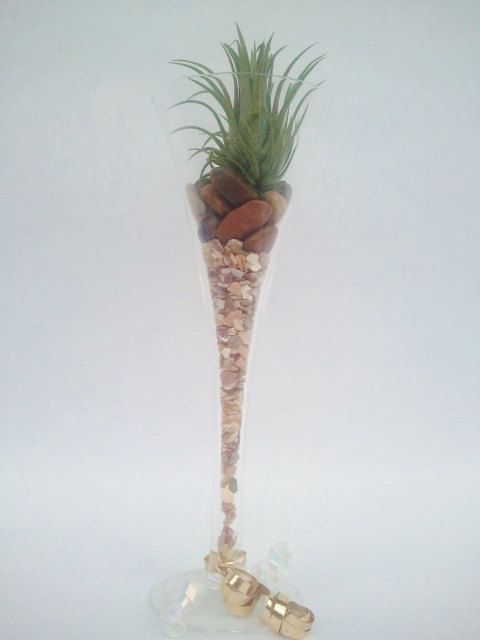 Fantastic Ionantha Rubra Tillandsia Bromeliad Air by EDsAirplants, $12.99
