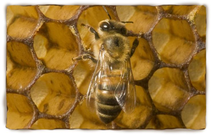 Useful information to use in the classroom when doing a lesson on bees and pollination
