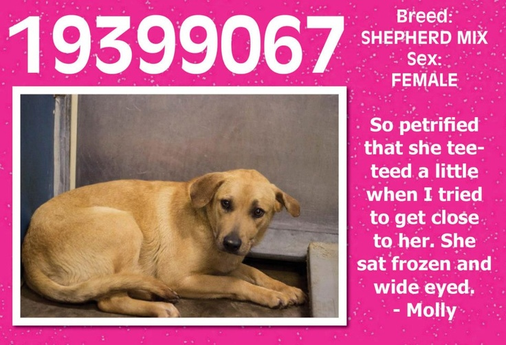 HELP SAVE THIS TERRIFIED GIRL Urgent Animals at Fort