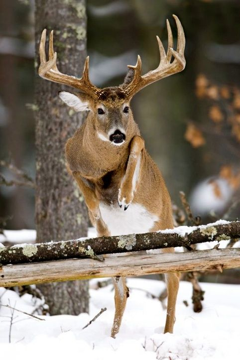 A personal experience of hunting a deer