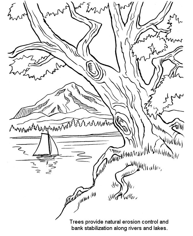 arbor day coloring pages riverbank trees ecology conservation tree planting coloring page sheets