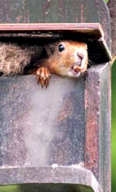 Squirrel - I got here first.                                                                                                                                                      More